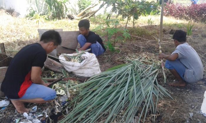 sisa sisa tebangan pohon tebu yang akan dibuat kompos